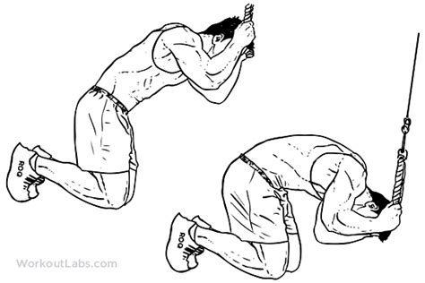 Kneeling Cable Crunch | Illustrated Exercise guide