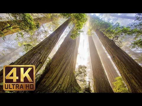 National Geographic Live! - Super Trees: Climbing a Giant