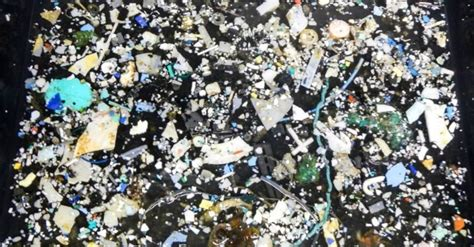 The Great Pacific Garbage Patch is growing at an