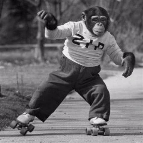 Pin by Rochelle McClanahan on Roller Derby | Primates