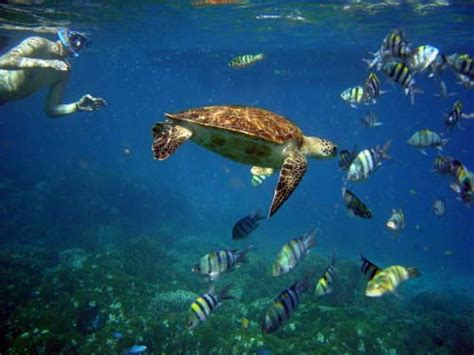 Thoughts on Snorkeling-Maui - The Red Headed Traveler