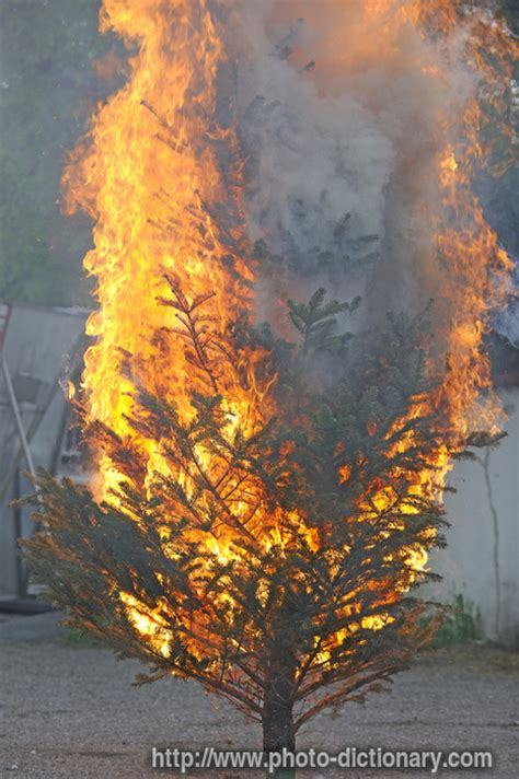 burning tree - photo/picture definition at Photo
