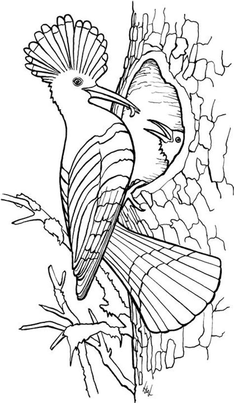 Bird Coloring Pages - Coloringpages1001