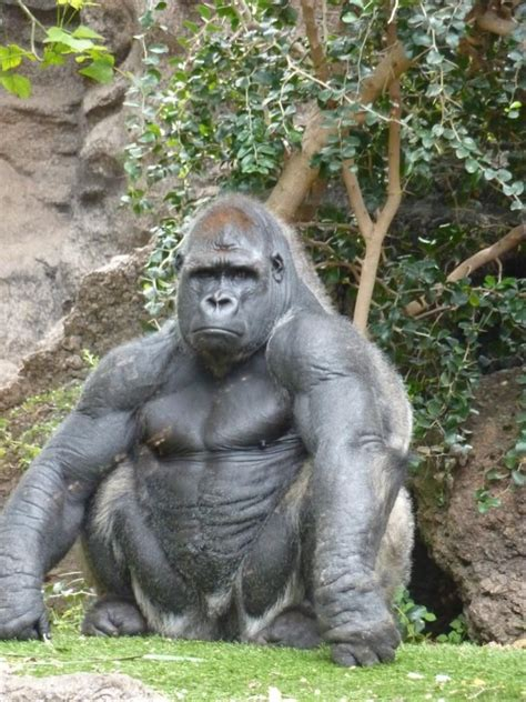 10 Jacked Animals That Didn't Skip Going To The Gym